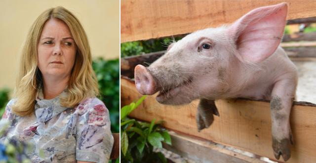 Jennie Nilsson oroar sig för att svenska grisar ska smittas av den afrikanska svinpesten. TT