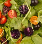 Genmodifierade tomater. Arkivbild. Andrew Davis / TT / NTB Scanpix