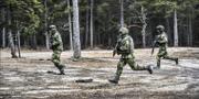 Militärövning i skogen.  Tomas Oneborg/SvD/TT
