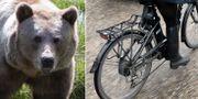 Björn/cyklist. TT