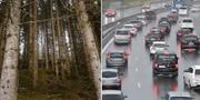 Träd och trafik. Arkivbild. TT.
