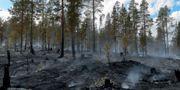 Brandhärjade områden på Älvdalens skjutfält vid Trängslet. Maja Suslin/TT / TT NYHETSBYRÅN