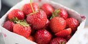 Odlare tror på svenska jordgubbar till nationaldagen.  Fredrik Sandberg/TT / TT NYHETSBYRÅN