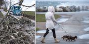 Bilder från de senaste dagarnas blåst i Skåne.  TT
