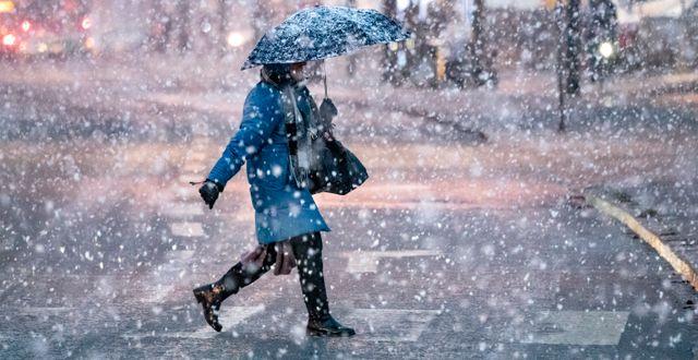 Snöfall i Malmö den 12 januari. Arkivbild. Johan Nilsson/TT / TT NYHETSBYRÅN