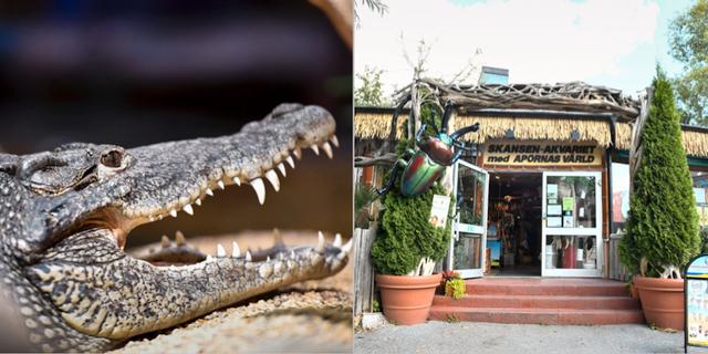 En krokodil på Skansenakvariet / Ingången till akvariet. TT