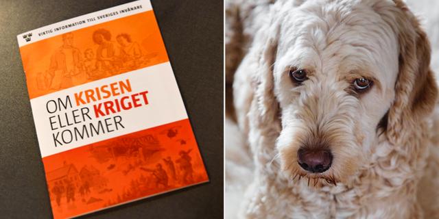 MSB:s broschyr samt en portugisisk vattenhund. TT.