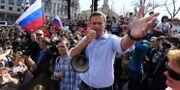 Aleksej Navalnyj.  KIRILL KUDRYAVTSEV / AFP