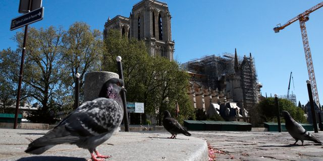 En duva framför Notre-Dame igår. Christophe Ena / TT NYHETSBYRÅN