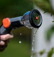 Det råder bevattningsförbud på flera håll på grund av vattenbristen. Pontus Lundahl/TT / TT NYHETSBYRÅN