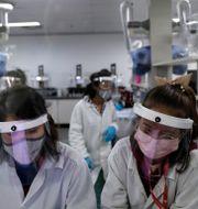 Laboratoriepersonal som arbetar med ryska vaccinet Sputnik V. Eraldo Peres / TT NYHETSBYRÅN