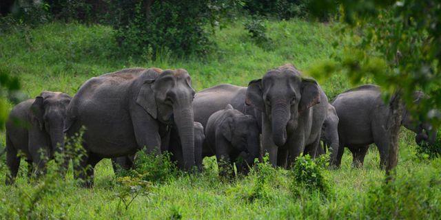 I sommar får Frankrike ett pensionsärsboende för cirkuselefanter (bilden är från ett elefantreservat i Thailand). Flickr