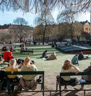 Vår i Stockholm. Malin Hoelstad/SvD/TT / TT NYHETSBYRÅN