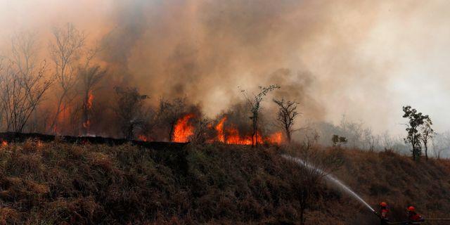Brandmän arbetar med att försöka släcka en brand i utanför Robore i Bolivia.  Juan Karita / TT NYHETSBYRÅN