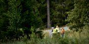 Skallgångskedja på Värmdö igår för att hitta 12-åringen. Erik Simander/TT / TT NYHETSBYRÅN