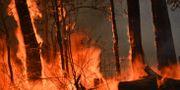 Brand nära Taree, 35 mil norr om Sydney. PETER PARKS / AFP
