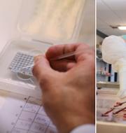 Veterinärer i Norge har gjort obduktioner och tagit prover på norska hundar som dött/arkiv. TT