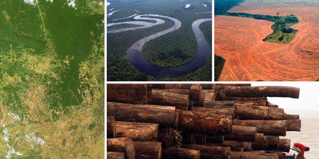 Skovling av amazonas minskar