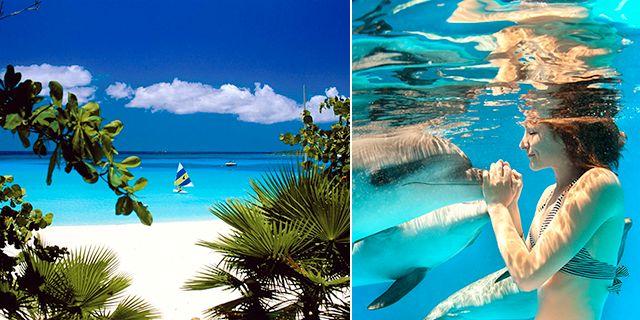 På den lilla paradisön Anguilla finns det 33 stränder att välja mellan. Får du inte nog av vattnet går det bland annat att simma med delfiner. Wikicommons