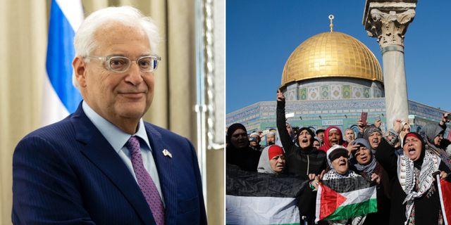 David Friedman och al-Aqsamoskén. TT.