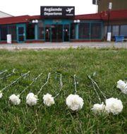 Nio vita rosor för att hedra offren i olyckan. Jeppe Gustafsson / TT NYHETSBYRÅN