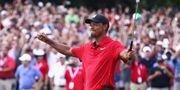 Tiger Woods.  Tim Bradbury / GETTY IMAGES NORTH AMERICA