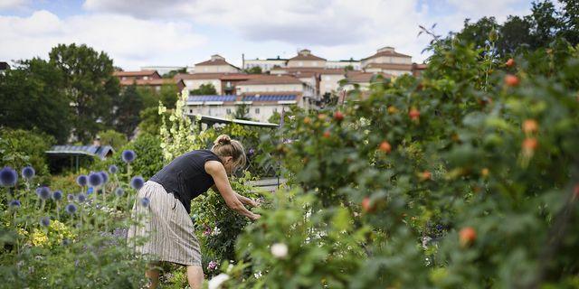 Trädgårdstjänster går att få rut-avdrag för.  TT