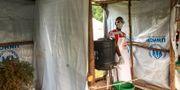 Vårdpersonal vid gränsen mellan Kongo-Kinshasa och Uganda.  Ben Wise / TT NYHETSBYRÅN