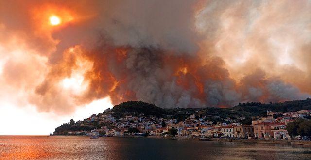 Brand på den grekiska ön Evia. Michael Pappas / TT NYHETSBYRÅN