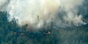 Bild från branden i Ljusdal den 19 juli. Maja Suslin/TT