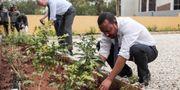 Etiopiens premiärminister planterar. Office of the Prime Minister of Ethiopia
