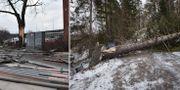 Bilder från Sickla och Ingarö efter stormens framfart.  Stina Stjernkvist/TT