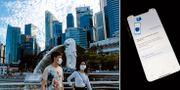 Invånare i Singapore/appen Tracetogether. TT
