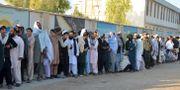 Köerna ringlade sig genast långa inför röstningen i Kandahar. STR / TT NYHETSBYRÅN/ NTB Scanpix