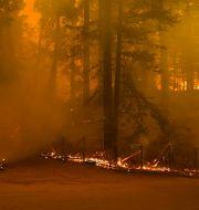 En fastighet brinner ner i en brand sydväst om San Jose. Marcio Jose Sanchez / TT NYHETSBYRÅN