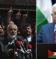 Hamas Ismail Haniyeh och den palestinske presidenten Mahmoud Abbas. Arkivbilder. TT