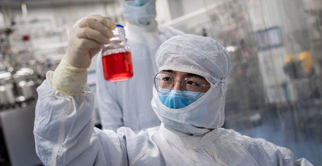 Illustrationsbild på forskare som jobbar med att ta fram ett vaccin mot viruset. NICOLAS ASFOURI / TT NYHETSBYRÅN