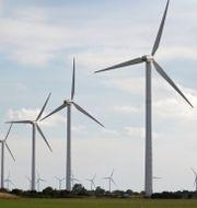 Vindkraftverk på Gotland Fredrik Sandberg/TT / TT NYHETSBYRÅN