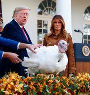 Arkivbild: Donald och Melania Trump vid kalkonbenådningen 2019 TOM BRENNER / TT NYHETSBYRÅN