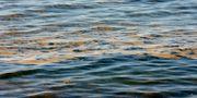 Arkivbild på algblomning.  JANERIK HENRIKSSON / TT / TT NYHETSBYRÅN