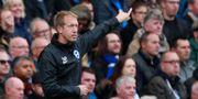 Potter i sin nya roll som Brightons tränare ANDREW COULDRIDGE / TT NYHETSBYRÅN
