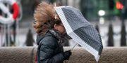 Kraftig blåst och regn pressar elpriset.  Johan Nilsson/TT / TT NYHETSBYRÅN