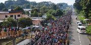 Människor promenerar genom Mexiko mot USA. PEDRO PARDO / AFP