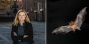 Katarina Luhr (MP) och en fladdermus TT