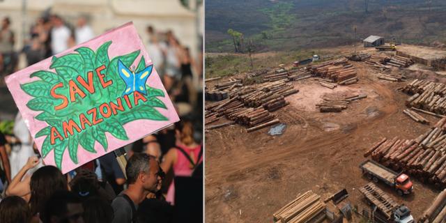 Person som protesterar mot avskogningen samt en avskogad plats.  TT