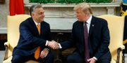 Ungerns premiärminister Viktor Orbán och USA:s president Donald Trump. Evan Vucci / TT NYHETSBYRÅN