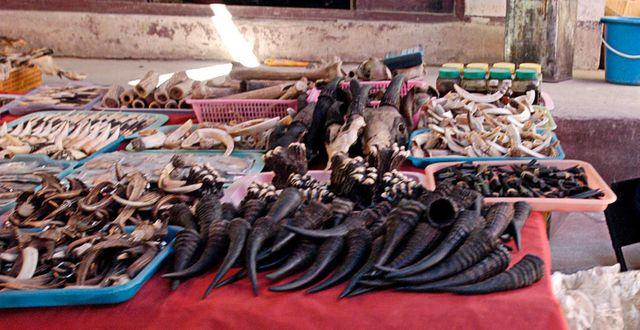 Arkivbild: Illegala produkter från vilda djur på en marknad i Tachileik, Myamnar DAVID LONGSTREATH / TT NYHETSBYRÅN