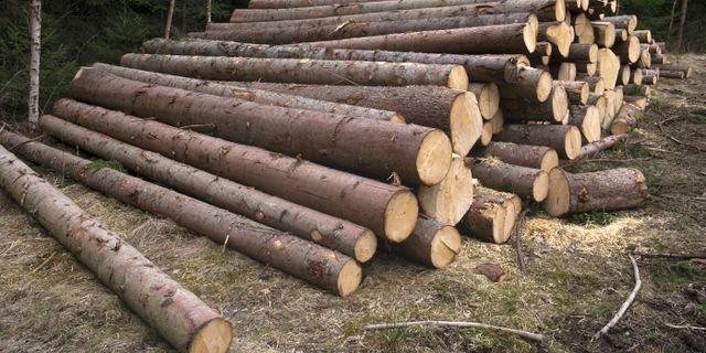Rester från skogsavverkning kan i framtiden kanske bli ett kostfiber.  Ruud, Vidar / TT NYHETSBYRÅN