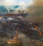 Brand på nyligen avskogad mark nära Novo Progresso i delstaten Pará. Andre Penner / TT NYHETSBYRÅN