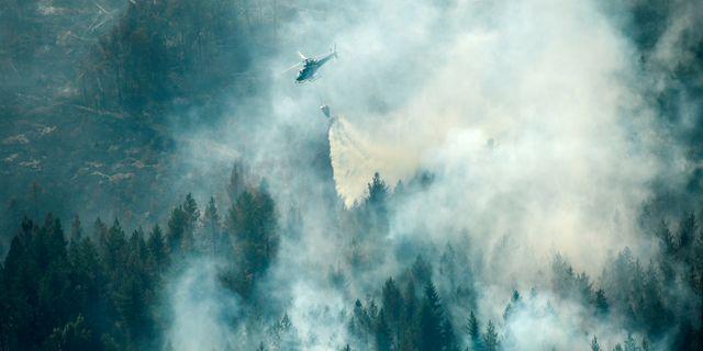 Förra sommarens skogsbrand i Ljusdal. Arkivbild. TT NEWS AGENCY / TT NYHETSBYRÅN